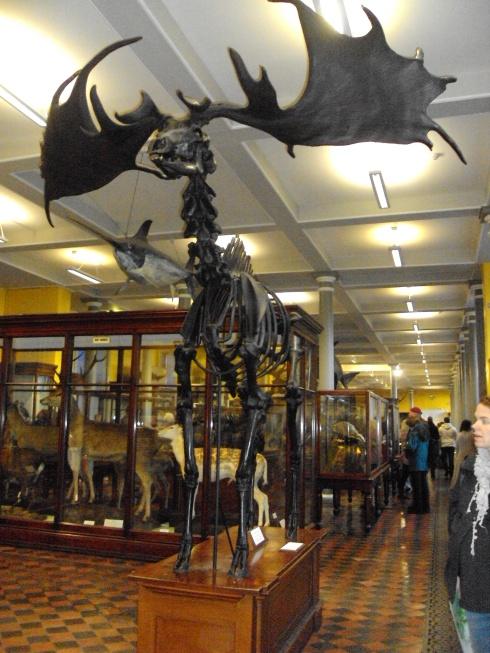 Museu de História Natural Dublin